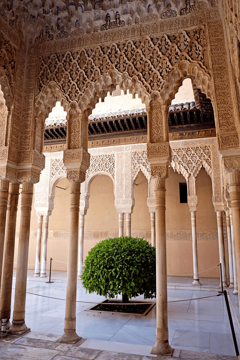 Alhambra Bush