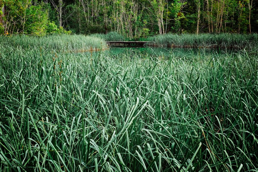 Marsh Plitvice