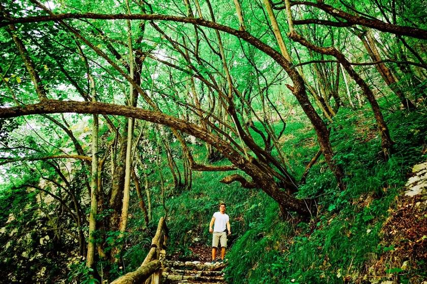 Plitvice Trees