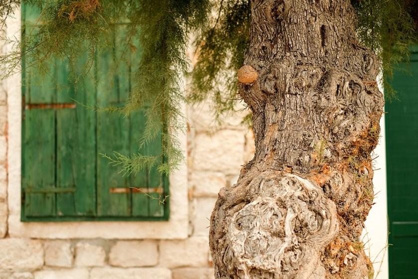 Pusisca Tree