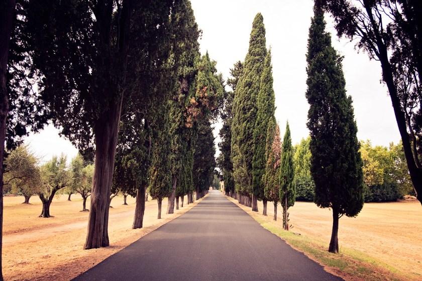Trees Rome
