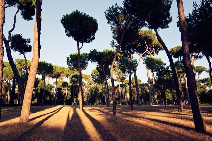Pines Rome