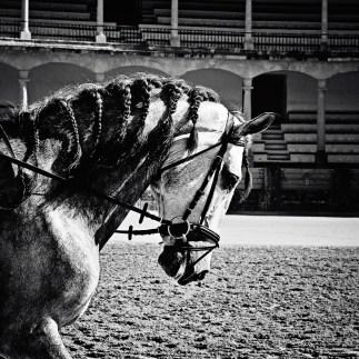 Ronda Horse