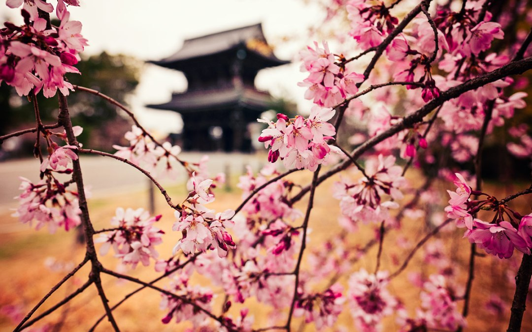 Sweet Spring in Kyoto
