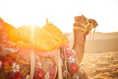 Camel Safari Sunset in India