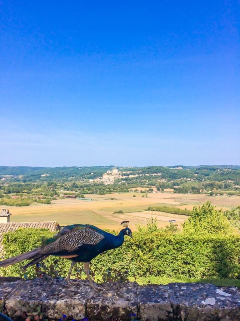 Peacock at Marqueyssac