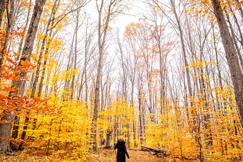 My mother hiking in the forest.