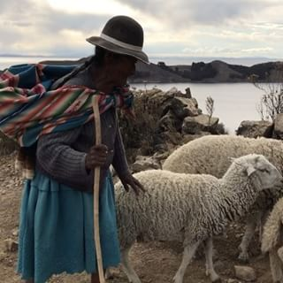 """It's so fluffy I'm going to die!"" A #shepherd and #sheep in #bolivia"
