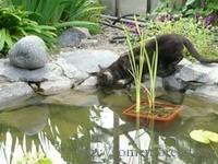 Кот у пруда