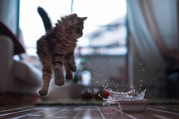 Kitten in Motion