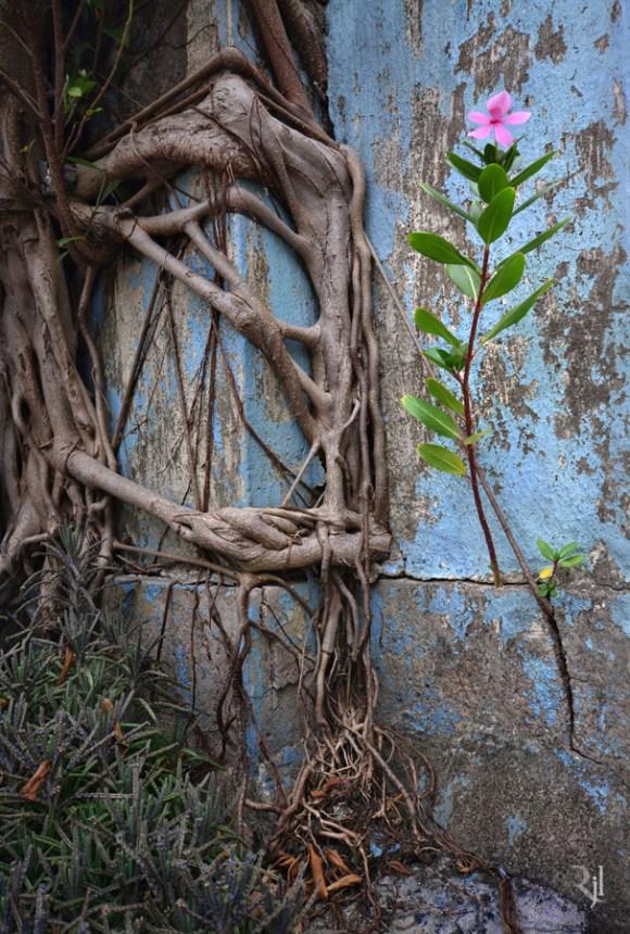 Árvores no concreto (1)