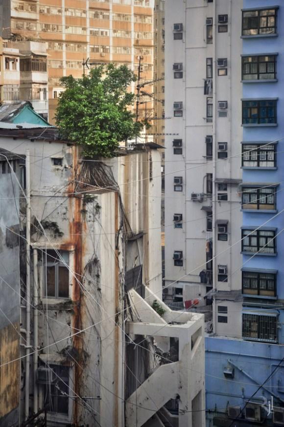 Árvores no concreto (2)