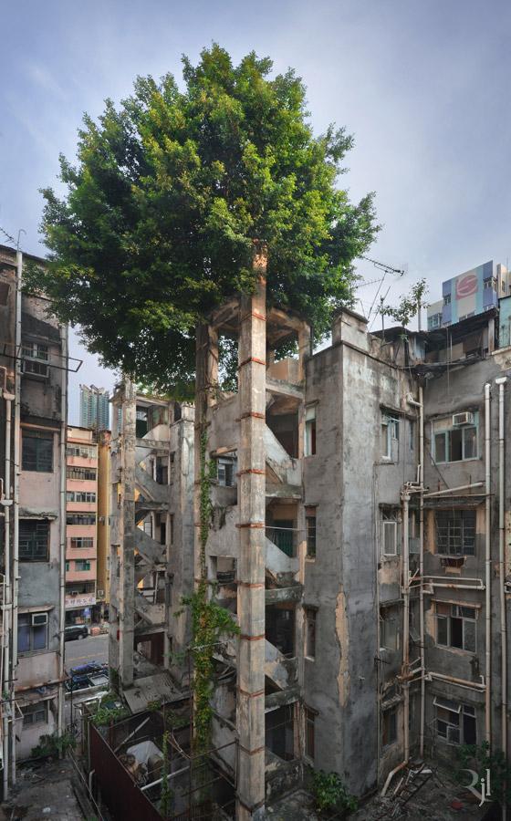 Árvores no concreto (4)