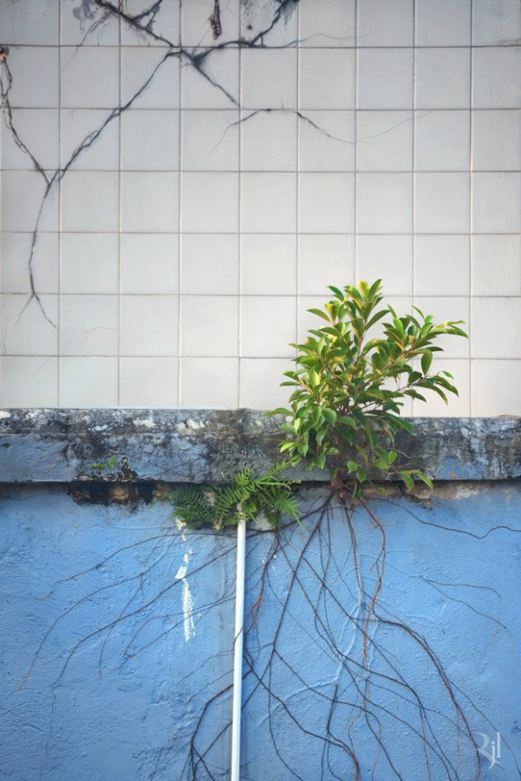 Árvores no concreto (9)