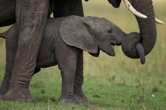 05-baby-elephant-950[1]