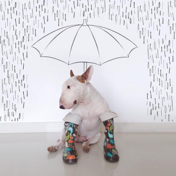 Cães e desenhos (10)
