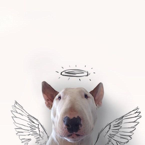 Cães e desenhos (7)