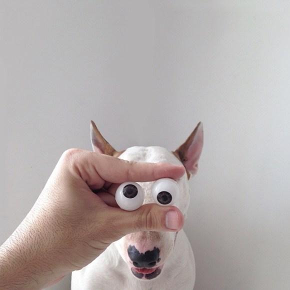 Cães e desenhos (9)