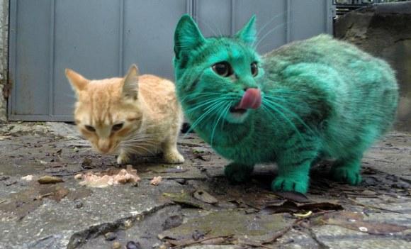 Gato Verde da Bulgária 1