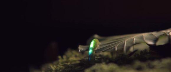 Bioluminescência digital 5