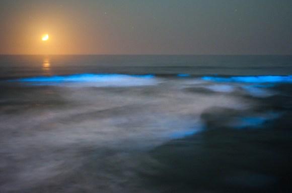 Praias luminescentes 5