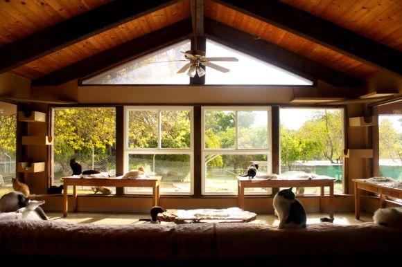 Santuário dos gatos 1