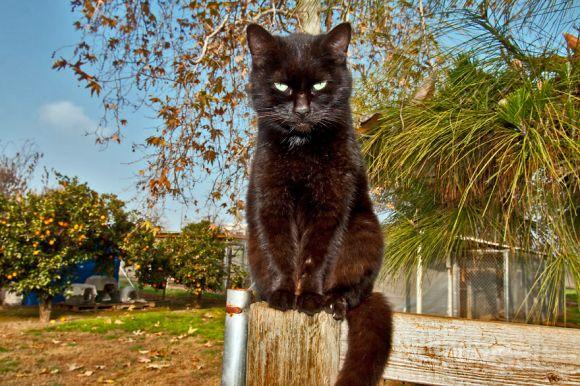 Santuário dos gatos 3