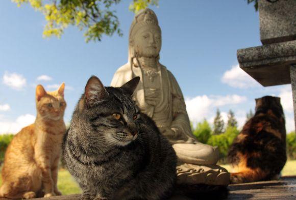 Santuário dos gatos 7