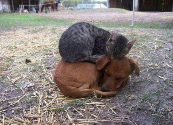 Gatos e cães 1