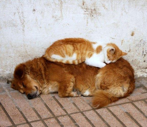 Gatos e cães 13