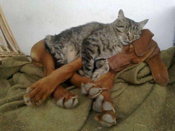 Gatos e cães 3