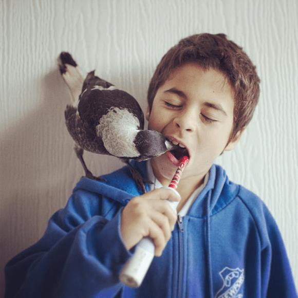 Amizade entre menino e pássaro 01