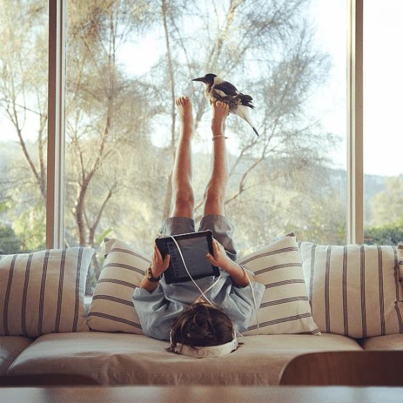 Amizade entre menino e pássaro 02