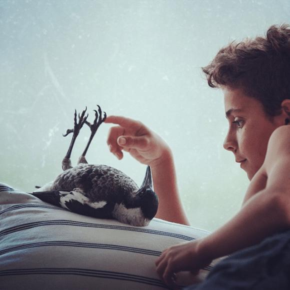 Amizade entre menino e pássaro 04