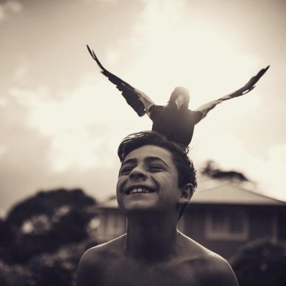 Amizade entre menino e pássaro 13