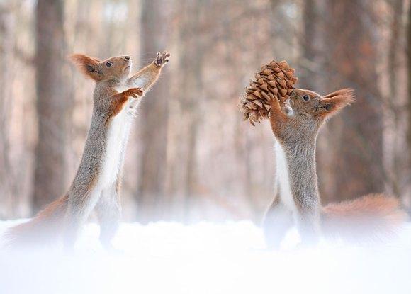 Esquilos fofos - fotografia 10