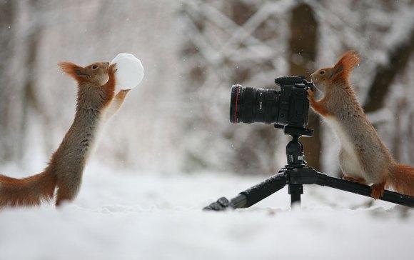 Esquilos fofos - fotografia 13