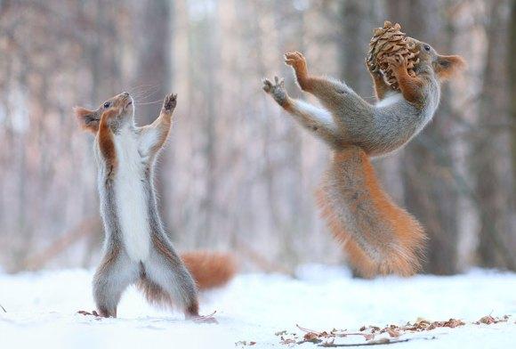 Esquilos fofos - fotografia 5