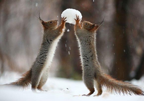 Esquilos fofos - fotografia 7