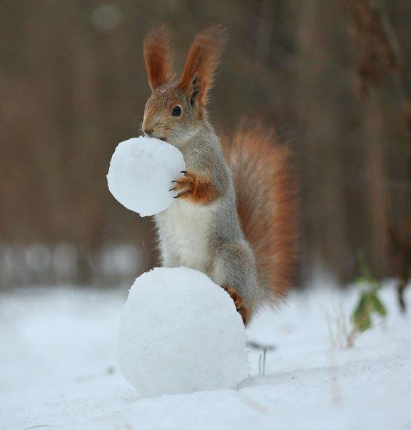 Esquilos fofos - fotografia 9