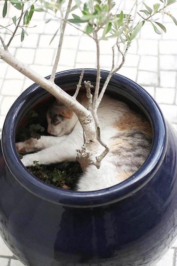 Gatos em vasos 6