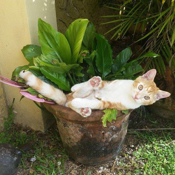 Gatos em vasos 9