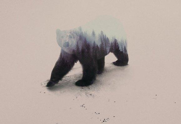 Fotos de dupla exposição - animais e floresta 19