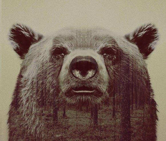 Fotos de dupla exposição - animais e floresta 20