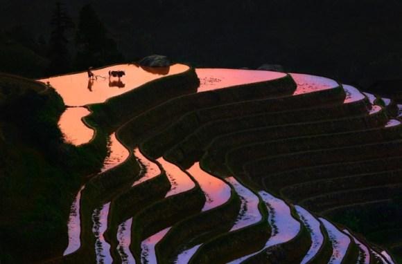 Campos de arroz chineses 7