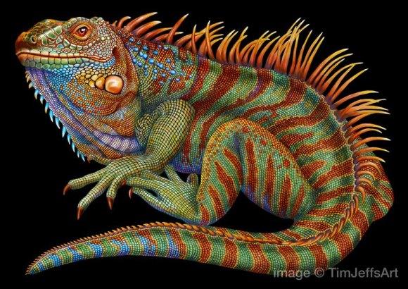 Desenho de lagarto 1