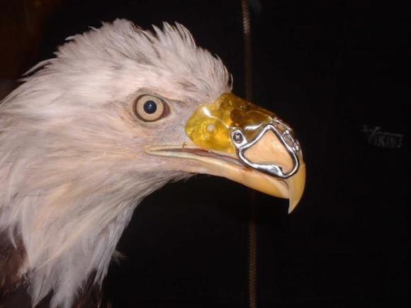 Eagle1[1]