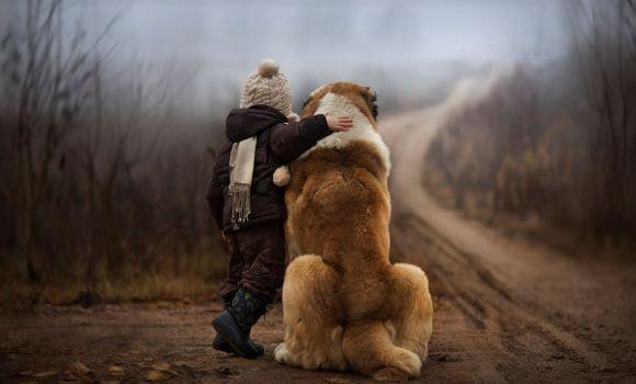 Fotos de cachorros 13
