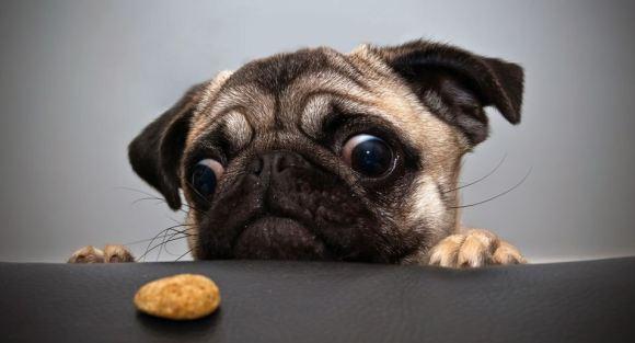 Fotos de cachorros 24