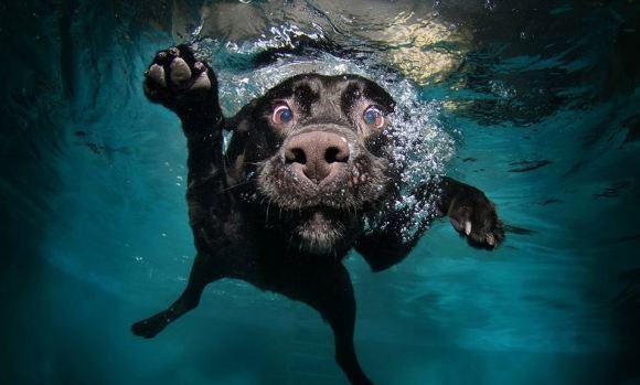 Fotos de cachorros 6